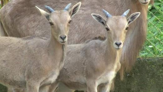 Нови обитатели в старозагорския зоопарк