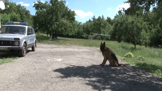 """Какво """"работи"""" полицейското куче?"""