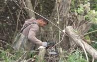 Започна почистването на река Бедечка