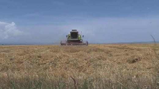Започна плащането на зърнопроизводителите за единица площ