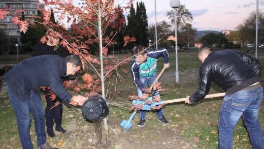 В края на миналата година, членове на МГЕРБ залесиха 17 дъба в парк Зелен клин