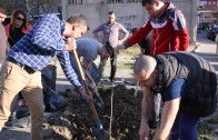 ГЕРБ залесиха над 100 дървета в Стара Загора