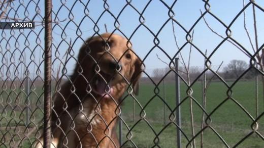 Благотворителност за животните в общинския приют