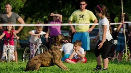 Детски празник с кучета организират  в чест на 5-ти октомври