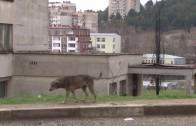 Започва изграждане на социални жилища в Стара Загора