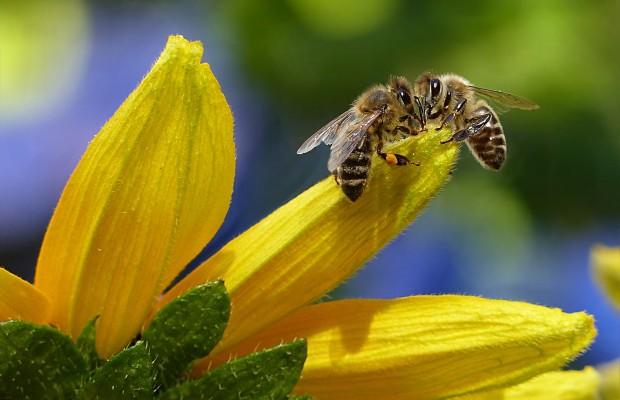 Дискусия за опазване на пчелите в Стара Загора