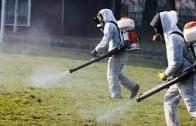 Предстои обработка срещу комари на тревни площи в Стара Загора