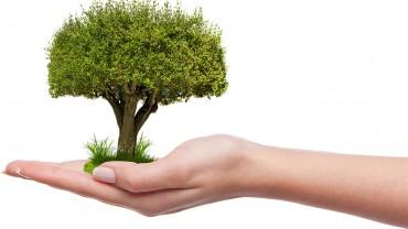 Над 2000 старозагорски деца отглеждат дърво вкъщи