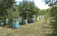 Неизвестни задигнаха 29 пчелни кошера