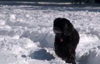 Красив спомен от снежната работна седмица…