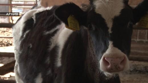 Утвърдиха помощите за животновъди за 2019 година.