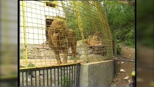 Стара Загора в прехода – зоопаркът в края на 90-те