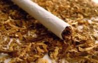 Иззеха близо 380 кг контрабанден тютюн до Шипка